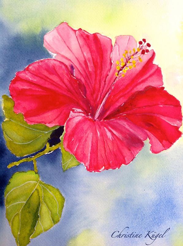 Dessin aquarelle fleurs hawaii hibiscus id e d 39 image de - Dessin d hibiscus ...